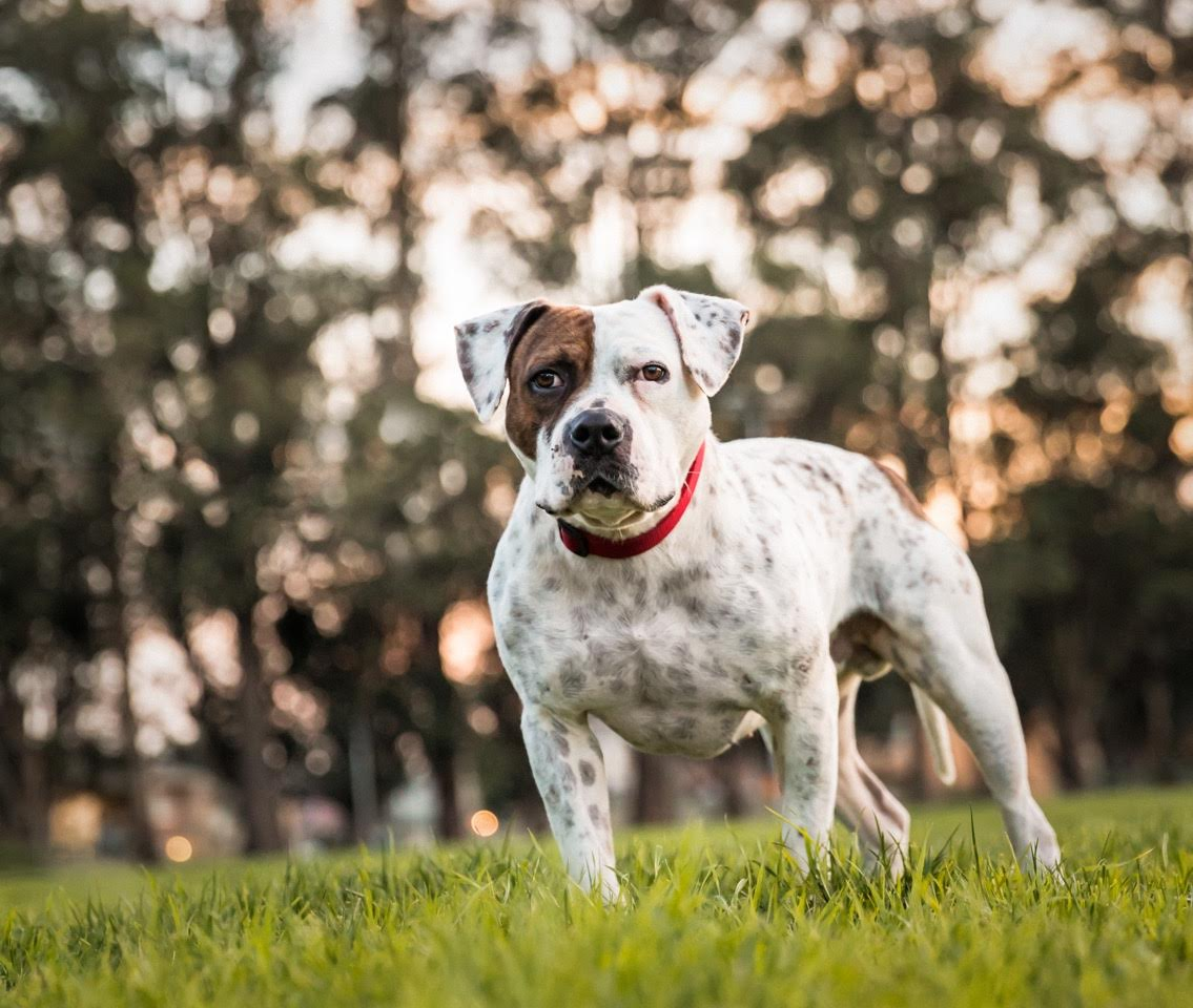homeatlastrescue Adopt a dog or cat from Home at Last Animal Rescue!